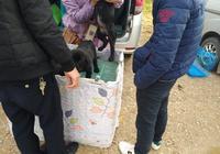 男子自己的寵物走丟後,又到狗市想購買黑色拉布拉多!