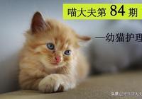 你還不知道怎麼護理小貓嗎?這一篇幼貓護理指南,請收下!