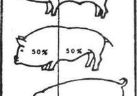 豬年也說豬,關於豬你不知道的事
