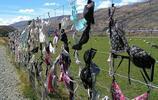 新西蘭的胸罩柵欄打破吉尼斯紀錄,吸引眾多遊客駐足拍照參觀