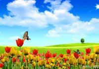 你是人間四月天,邀你一起在詩風詞韻中看最美的風景5——完結篇