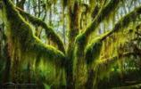 世界上最美的樹 中國這棵讓人驕傲