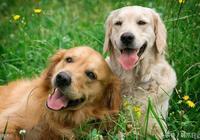 養狗容易生病?其實只要做好這7點,想去動物醫院都難!