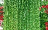 綠蘿趕緊扔了吧!現在這十多種美觀盆栽,比仙人掌耐活,比蘭花香
