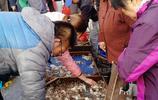 早市海鮮市場 新鮮針魚16元一斤 活八帶20元一斤引大媽搶購囤貨