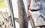 農村大集上一米五長的大魚 很少人能叫出名字 10塊錢一斤 切段賣