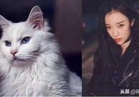 為什麼倪妮是貓系臉?原來是因為跟這種貓像