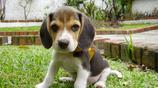 """全世界上壽命最長的犬類,中國""""神犬""""位居第一,壽命竟高達20年!"""