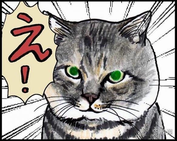 """推特人氣漫畫貓咪""""つしま""""真的存在!本體也超霸氣"""