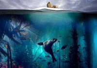 如何評價BBC紀錄片《藍色星球2》?