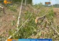 昌樂:幾十戶人家的樹一夜被砍