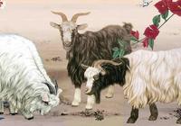 屬羊2017年幸運顏色和幸運數字