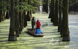 湖北武漢:漲渡湖溼地嚴控水上浮萍