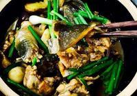 中華閩菜:紅燒甲魚