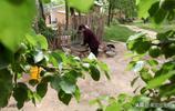 淚奔,5歲逃荒到河南農村的老人,如今76歲,最大願望回山東老家