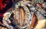 市民搶購漁船上雜亂的海鮮 為什麼對海鮮攤上的海鮮挑挑揀揀?