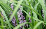 農村的你有見過這種草嗎?你知道它可以入藥嗎?