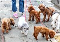 如果一個居住小區無人養狗,你會不會覺得缺少點什麼?