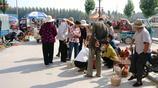 農村大集上人們圍著幹啥,散養5年稀罕物,老人一開口都說吃不起