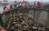 實拍中國牡蠣之鄉,年產牡蠣30萬噸,創造產值24億元