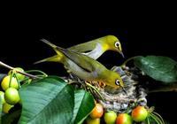 寫在鳥類遷徙之時的感悟