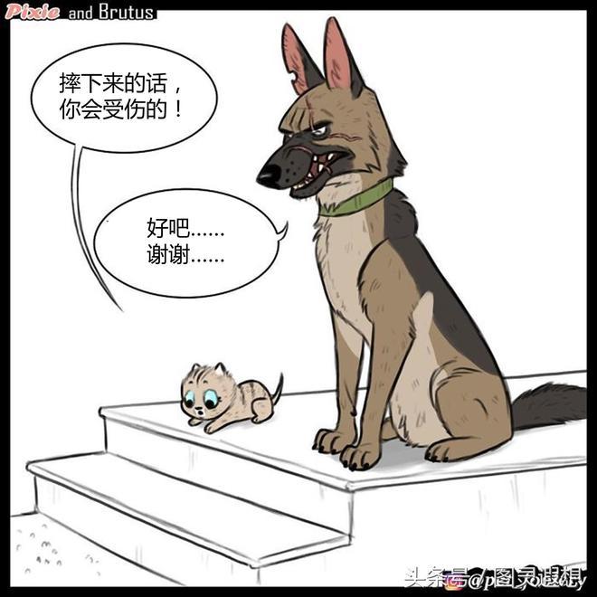 萌翻了:小奶貓與退役軍犬之家庭探索,第二集