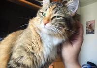 貓咪用頭蹭主人不僅為了表達愛意,還是在宣示對鏟屎官的所有權!