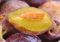 西梅產地在哪裡 西梅的營養價值有哪些