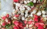 """小時候經常吃的""""野草莓"""",在80年代是上天贈與我們最好的東西"""