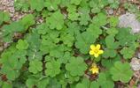 據說能從三葉草中找到4片葉子,就能得到幸運的眷顧,小編找到了