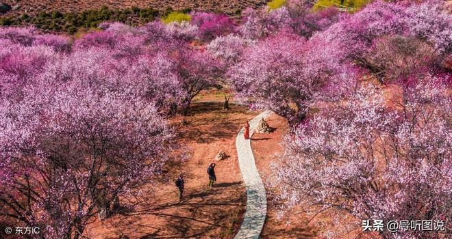 雪山腳下桃花開,爭相鬥豔引人來--領略西藏最浪漫,最美麗的春天