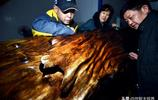 男子8年前買回三棵斷木,6名工匠花近兩個月時間打磨,看後驚呆了