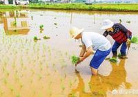 為什麼有些農村人年齡越大越喜歡種地?