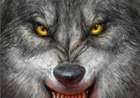 狼被馴養了還叫狼麼?