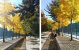 中央民族大學——已陶醉在京城美麗的秋景中