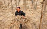 農村七旬老漢靠種6畝地,供養全家6口人,看他是如何做到的?