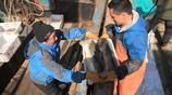 出海的漁民有的滿載而歸,有的僅僅捕到幾筐小魚