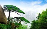 黃山迎客鬆,風景如畫,迷人的景色,畫家最愛之地