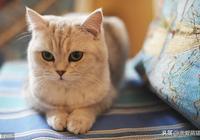 如果想讓喵星人愛上你,要學會五種方法,貓會離不開你