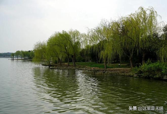 無錫蠡湖畔的楊柳吐出了翠綠的嫩芽,這裡春天的顏值很高