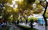 風景在路上(8)觀臨洮寶塔寺逛線街小吃城美食茶館體驗秦腔文化
