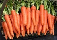 常吃胡蘿蔔的人為什麼可預防 夜盲症