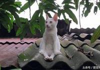 到處找不到貓,往屋頂一看笑翻了