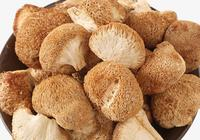 猴頭菇怎樣做比較好 猴頭菇有哪些營養功效