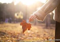 葉落花飛,人生無悔