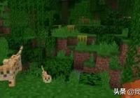 《我的世界》1.14更新後如何馴服豹貓?