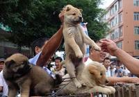 玉林狗肉節如約而至 愛狗行動何以變鬧劇?