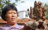 大媽撿一塊酷似孔雀開屏的奇石,有人出價五萬不賣,留著當傳家寶