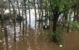大雨過後的松花江!