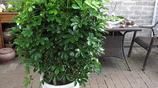 清新空氣綠色好心情,家有綠植健康有保障,你值得擁有的綠植盆栽